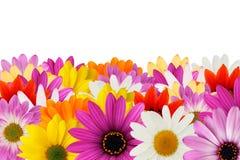 Cheerful daisy border stock photography