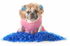 Cheerful dog Royalty Free Stock Images