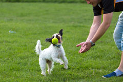 Cheerful dog playing with ball Stock Photos