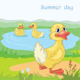 Cheerful duck. Three cheerful ducks on the blue lake stock illustration