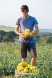 Cheerful farmer holding fresh melon crop on the field at organic eco farm. Cheerful proud farmer holding in hands fresh yellow melon crop on the field at Stock Photography