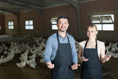 Cheerful farmers talking in hangar with ducks Stock Images