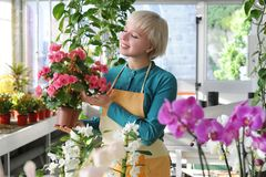 Cheerful florist at work Stock Images