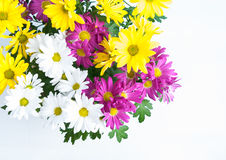 Cheerful flowers Stock Photos