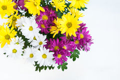 Cheerful flowers Royalty Free Stock Photography