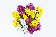 Cheerful flowers Stock Image