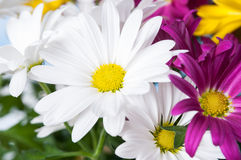 Cheerful flowers Stock Photography