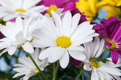 Cheerful flowers Stock Images