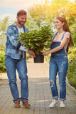 Cheerful gardeners carrying potted plant Stock Images