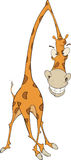 Cheerful giraffe Royalty Free Stock Image