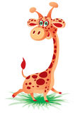 Cheerful giraffe Royalty Free Stock Image