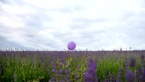 Cheerful girl jumping in lavender stock footage