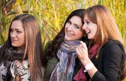 Cheerful girls in park. Cheerful girls twins, in the park Stock Photos