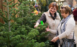 Cheerful glad elderly women selecting spruce Royalty Free Stock Images