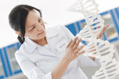 Cheerful intelligent scientist touching the DNA model. Genetic code. Cheerful intelligent female scientist standing near the DNA model and touching it while Royalty Free Stock Photography