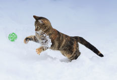 Cheerful  kitten jumps for the ball on white snow in winter Stock Images