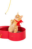 Cheerful kitty with a ribbon sits in a box Stock Photos