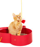 Cheerful kitty sits in a box Royalty Free Stock Photo