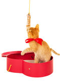 Cheerful kitty sits in a box Royalty Free Stock Image