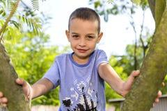 The cheerful little boy climbed the tree. Stock Photos