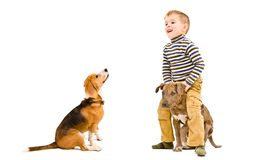 Cheerful little boy playing with his dogs. Isolated on white background royalty free stock photo