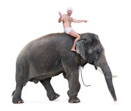 Cheerful mahout rides on an elephant Royalty Free Stock Photos