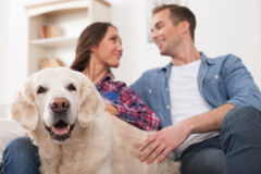 Cheerful man and woman are caring of pet Stock Images