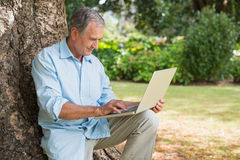 Cheerful mature man sitting on tree trunk using laptop Stock Photo
