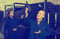 Cheerful mature man winery worker looking at bottle of sparkling. Cheerful mature men winery worker looking at bottle of sparkling wine in manufactory cellar Royalty Free Stock Photo