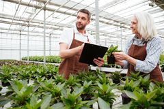 Cheerful woman showing plant to her colleague with folder Stock Images