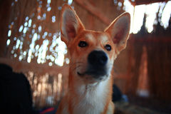 Cheerful mongrel dog Royalty Free Stock Photo