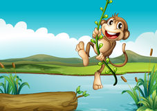 A cheerful monkey playing with the vine plant Royalty Free Stock Images