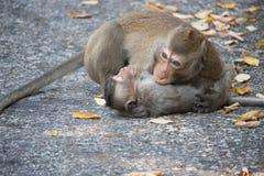 Cheerful monkeys Stock Photography