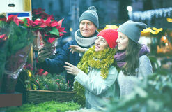 Cheerful mother, father and teen girl buying red Euphorbia and Stock Photo