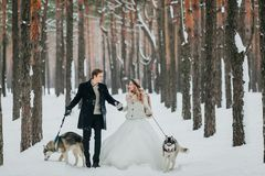 Cheerful newlyweds walks in the snowy forest with two siberian husky. Winter wedding. Artwork stock photo