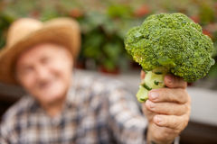 Cheerful old male worker with fresh cabbage. Skillful senior farmer is holding and showing a broccoli. The man is sitting and smiling. focus on the vegetable Stock Image
