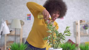 Cheerful and positive Beautiful african american woman with an afro hairstyle takes care of flowers and plants in modern. Expressive dancing cheerful and stock video footage