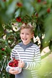 Kid picking berries Royalty Free Stock Image
