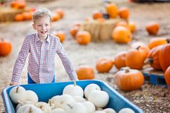 Kid at pumpkin patch. Cheerful positive boy enjoying autumn time at pumpkin patch pushing cart full of pumpkins Royalty Free Stock Photo
