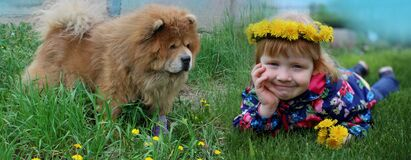 Cheerful red-haired girl with dandelions and a red dog are happy together