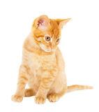 Cheerful redhead kitten Stock Photo