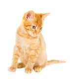 Cheerful redhead kitten Stock Image