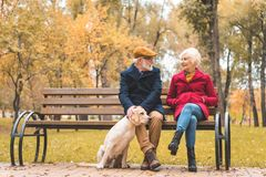 cheerful senior couple with labrador retriever dog sitting on bench in autumn royalty free stock photography