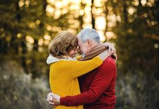 A senior couple standing in an autumn nature at sunset, hugging. A cheerful senior couple in love standing in an autumn nature at sunset, hugging royalty free stock images