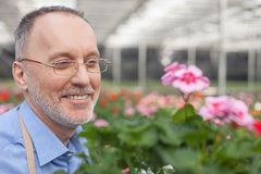 Cheerful senior florist is working at garden Stock Photography