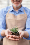 Cheerful senior gardener is working at greenhouse. Close up of skillful old florist holding plant with soil in his hands. The man is standing and smiling at Stock Images