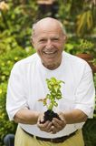 Cheerful Senior Man Holding A Plant Stock Photo