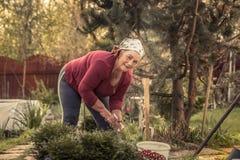 Cheerful senior women gardener working in garden. Cheerful active senior woman gardener working in flower garden royalty free stock photos