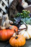 Vintage German teddybear in the middle of pumpkins that are ready for Halloween. royalty free stock images