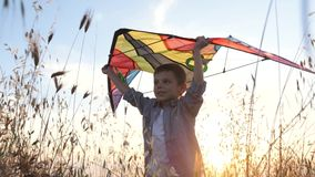 Cheerful small boy keeps colorful kite above his head standing in the grass illuminated by sunlight. Cheerful young boy keeps colorful kite above his head stock video